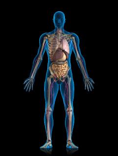 body whole njeriut tubuh human trupi systems badan manusia healing rahsia menarik mengenai living interaction medicine know trupit yang anda