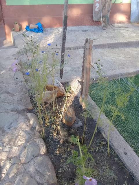 Die Hühner sind traurig sie kommen nicht mehr auf den Rasen.