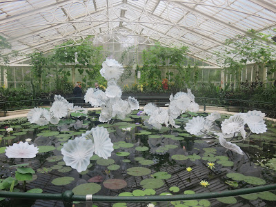 Chihuly sculpture - white glass lilies in a lily pond, with real lily leaves and flowers
