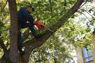 МЧС, добрые дела, 25, помогают, обрезка деревьев, 117 пожарная часть
