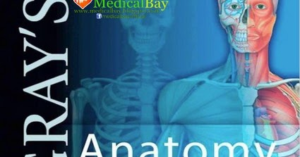 Grays Anatomy 40 Edition Pdf