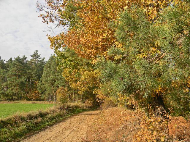 leśna droga, jesień, liście, przyroda