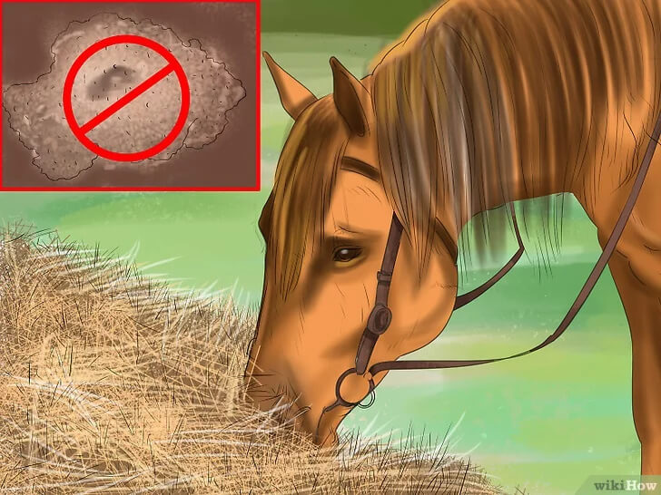 How to Feed Your Horse Nutrition Food