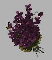 Blumenstrauß Veilchen