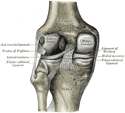 toate articulațiile doare imediat ce este articulațiile genunchiului și tratament