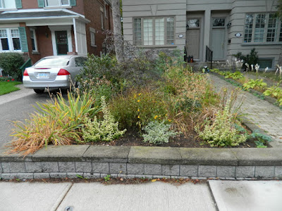 Toronto Fall Cleanup Bedford Park Front Garden before by Paul Jung Gardening Services