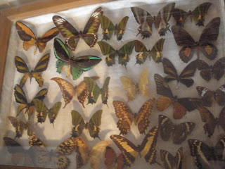 Butterfly Museum