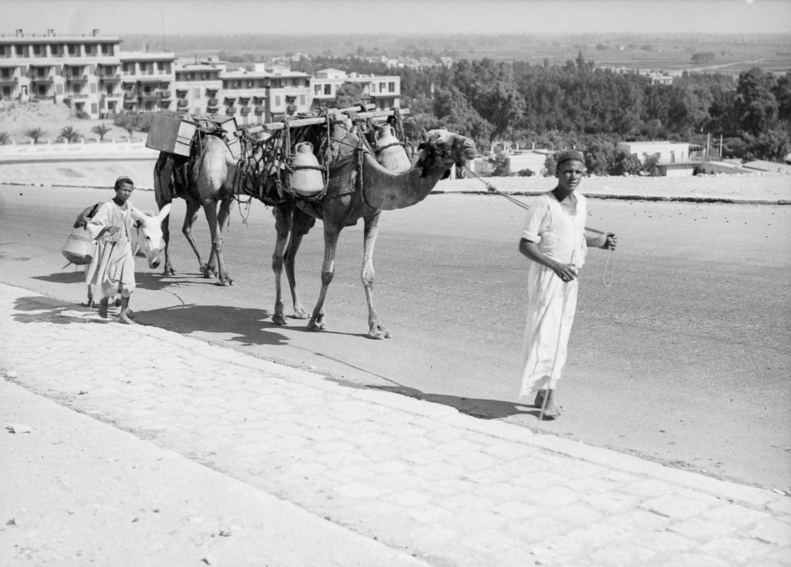 Camels and a donkey carry jugs of water. 1934.