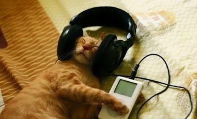 ini dia Lagu Musik Favorit untuk seekor Kucing