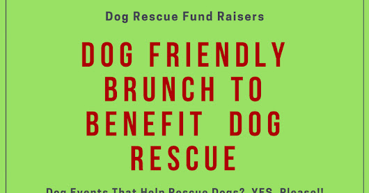 Dog Friendly Events That Help Rescue Dogs