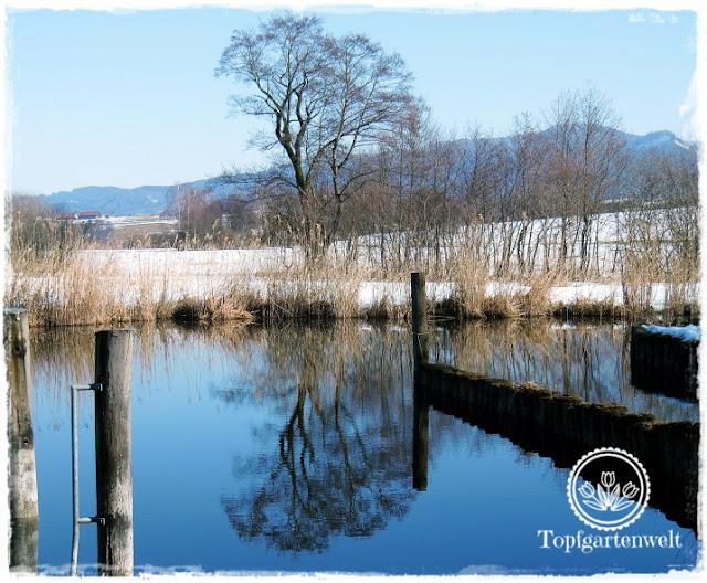 Gartenblog Topfgartenwelt Wallersee: Spiegelungen am Wasser