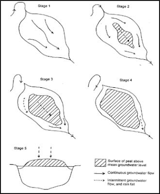 Proses Pembentukan Gambut : Terestrialisasi dan Paludifikasi, Evolusi Mire, Rheotrophic dan Ombrotrophic,