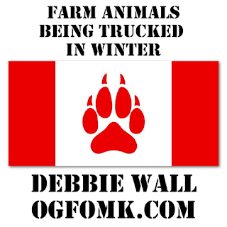 Debbie Wall - Square Peg: Farm Animals Being Trucked in Winter