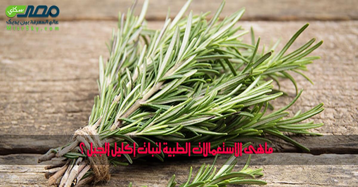 ماهى الاستعمالات الطبية لنبات إكليل الجبل ؟