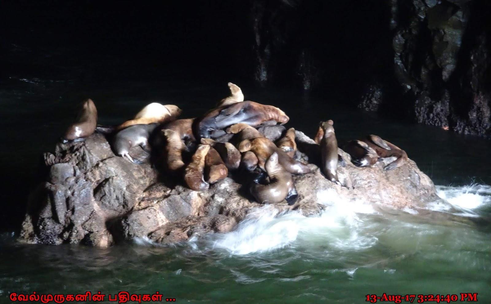 Sea Lion Caves Oregon Coast - Exploring My Life