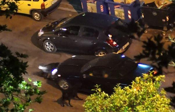 """Ηγουμενίτσα: Αγέλη αδέσποτων σκύλων επιτίθεται σε αυτοκίνητο στα """"Πλατάνια"""" (+ΒΙΝΤΕΟ)"""