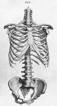 anatomy vintage lääkis pääsykoe