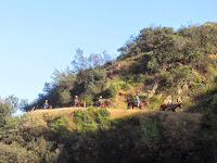 Equestrians on the trail on the north flank of Mt. Bell, Griffith Park