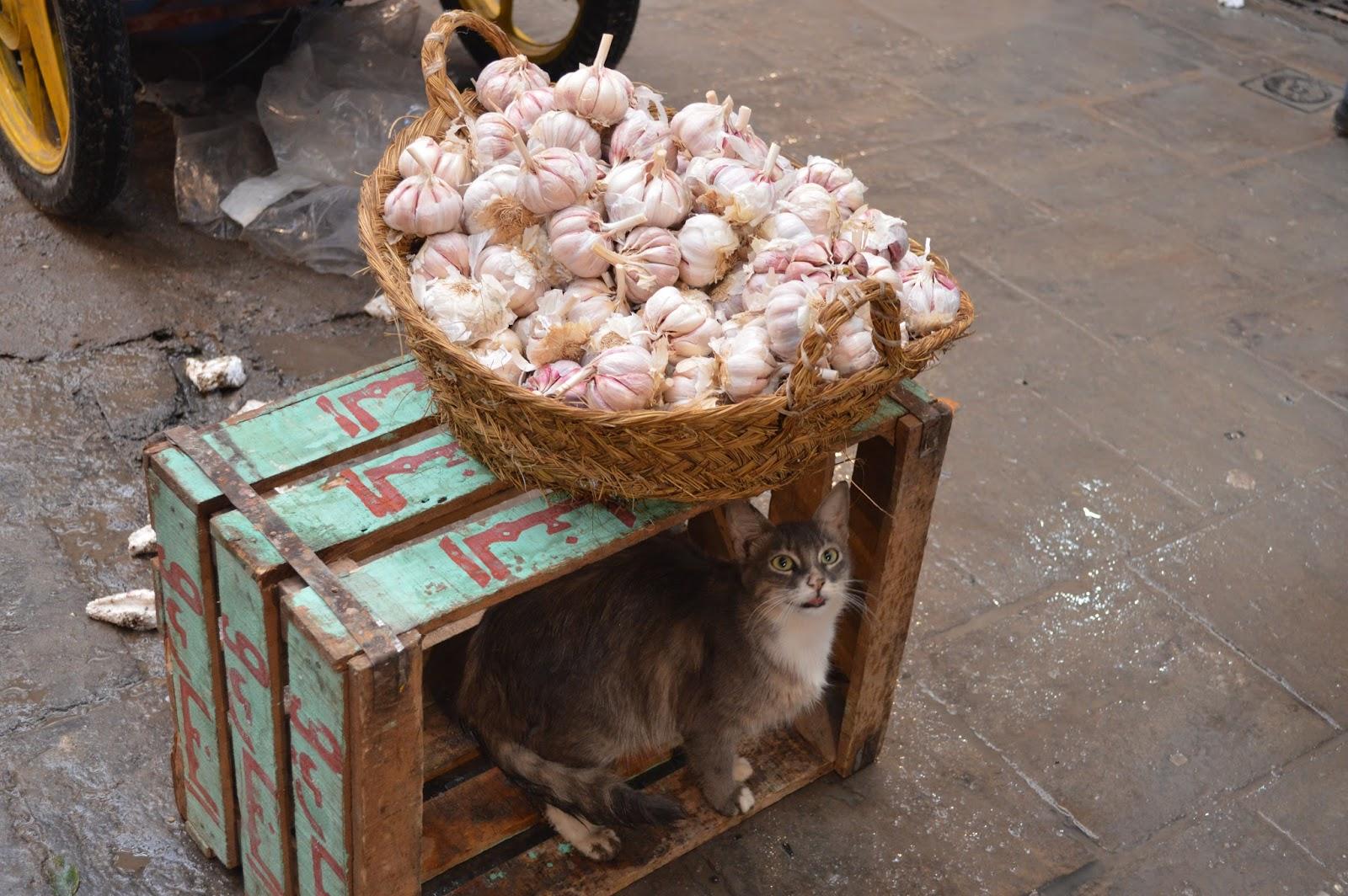 medina fes maroc blog voyage camille in bordeaux