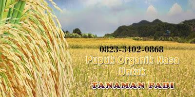085232128980 - JENIS PUPUK TERBAIK UNTUK TANAMAN PADI