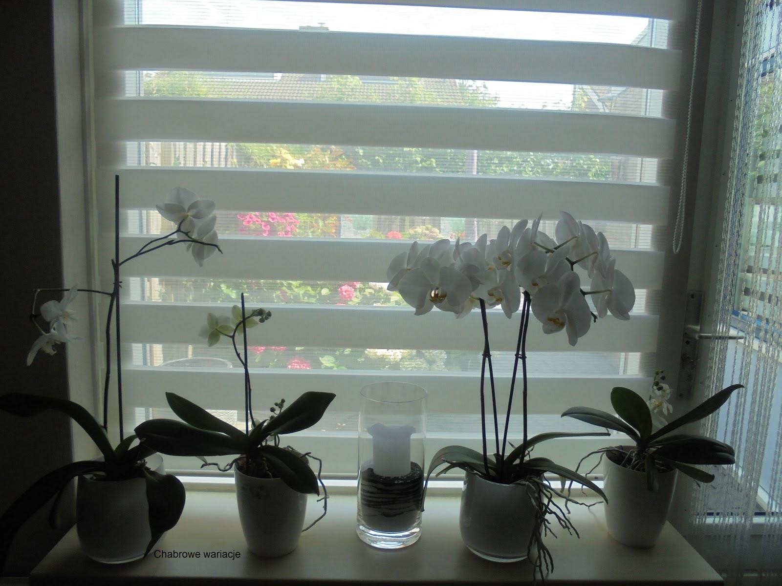 Te rośliny warto mieć w domu! Pozytywne skutki roślin doniczkowych dla zdrowia.