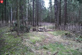 Лес около Крылово. Свалка мусора