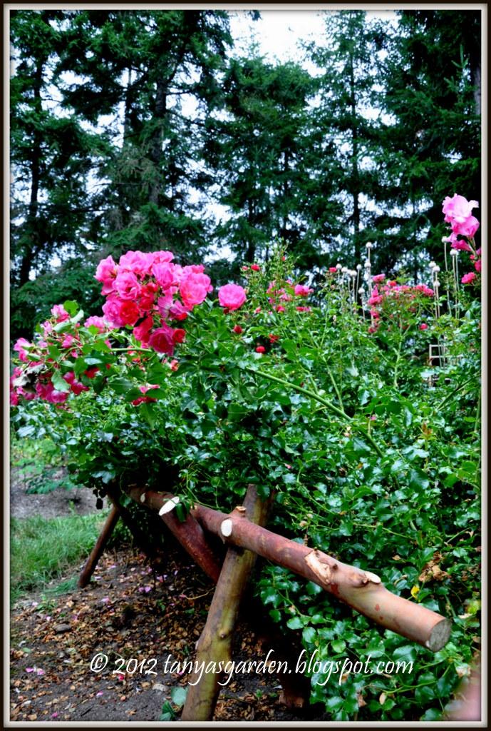 Mysecretgarden New Support For My Rose Bush