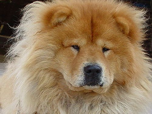 Cutest Dog Breeds Brown