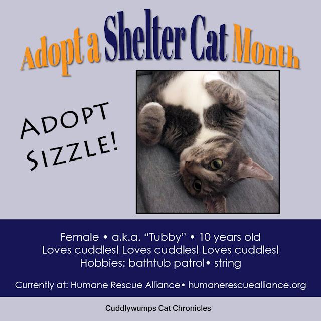 Adopt Sizzle!