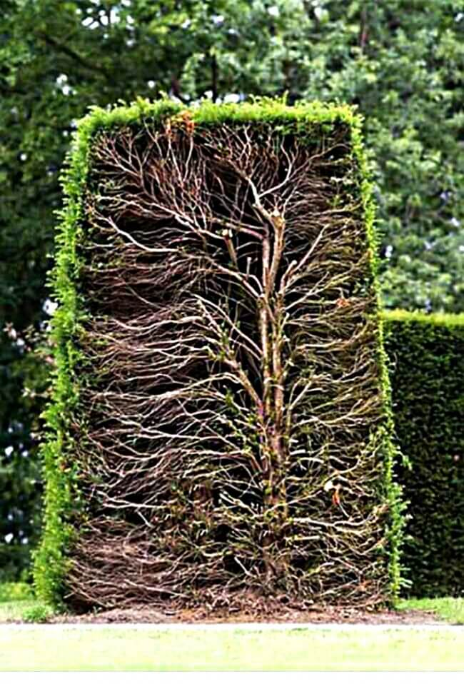 25 Breathtaking Pictures That Made Us Gasp - A sectional view of a hedge