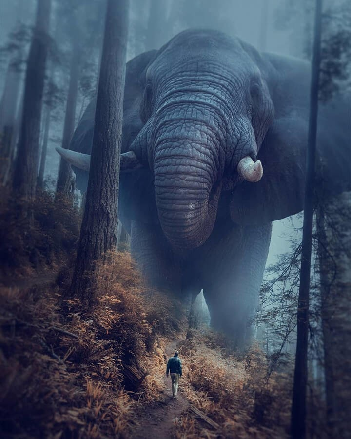 10-My-friend-in-the-forest-Rafy-A-www-designstack-co