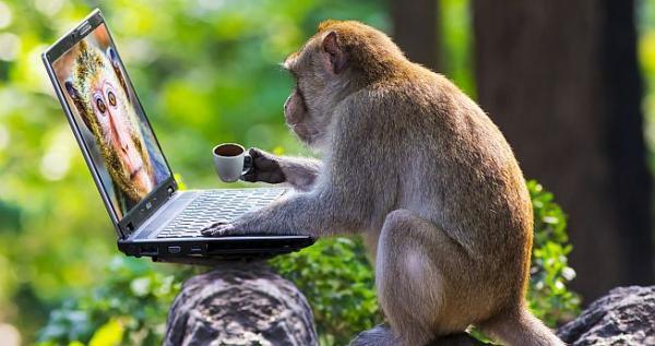 Αφηγήματα θριάμβου για... μαϊμούδες