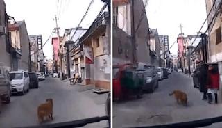 Σκύλος οδήγησε ασθενοφόρο στον ιδιοκτήτη του που λιποθύμησε σε ένα στενό δρομάκι και του έσωσε τη ζωή