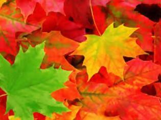 Γιατί κιτρινίζουν τα φύλλα το φθινόπωρο