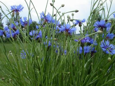 выращивание-цветов-из-семян