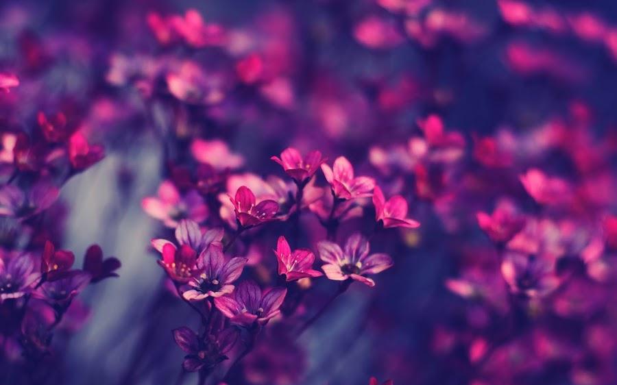 fondo wallpaper flores silvestres color violeta close up