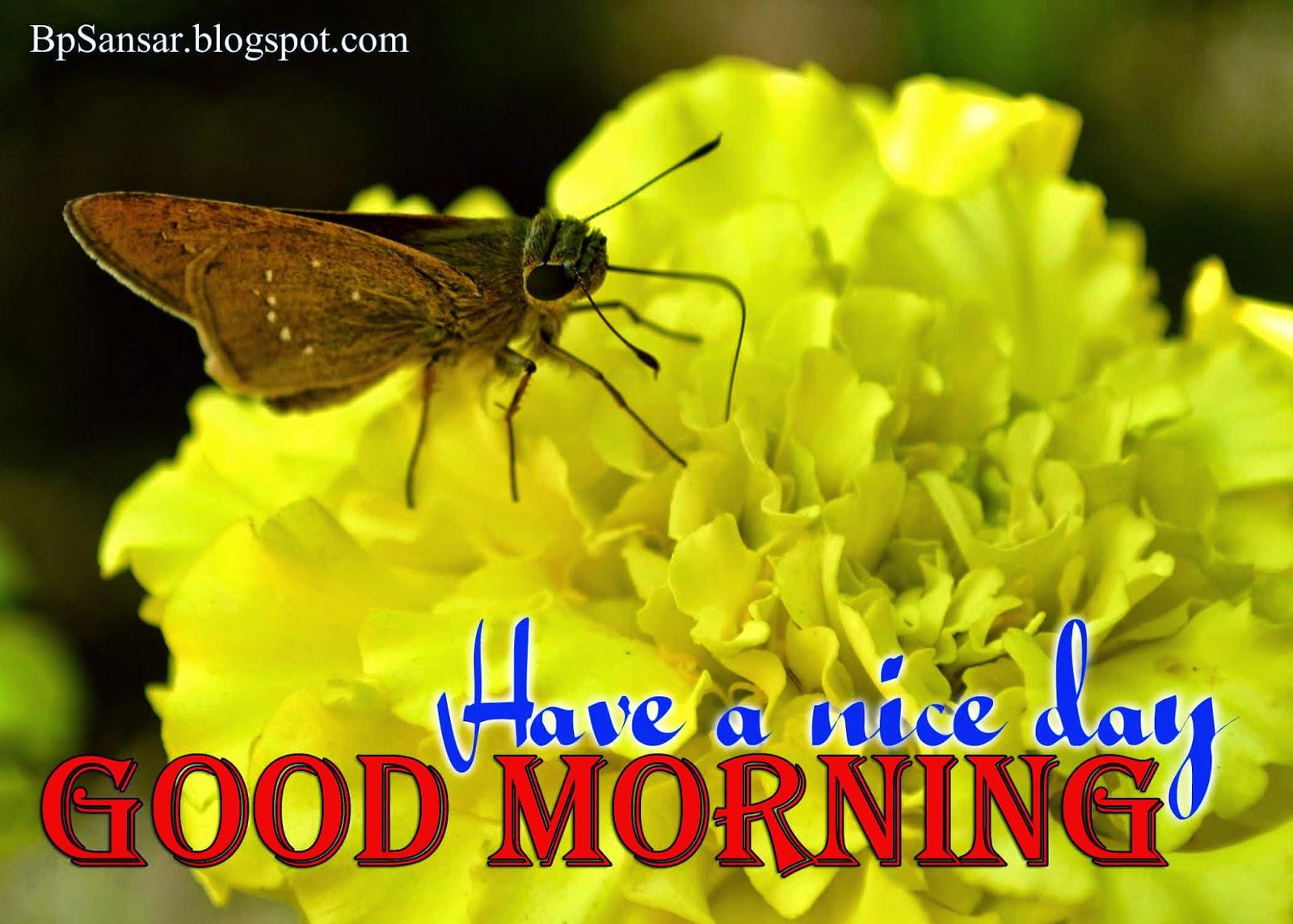 Good Morning Greeting Card 2014 - All Greeting Card