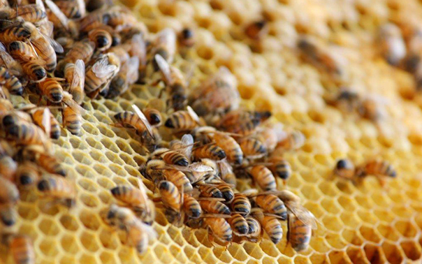 Έκτακτη σύσκεψη μελισσοκομικών συλλόγων: Τα προβλήματα της μελισσοκομίας σήμερα...