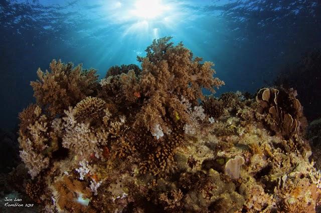 Coral Reef Romblon
