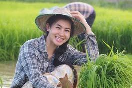 Cara efektif mencegah dan mengobati penyakit hawar daun pada tanaman padi