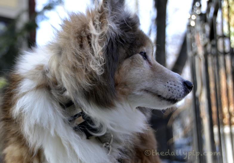 adopting an abandoned dog