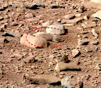 Mouse/Rodents in Mars NASA Quiet Image, Video – Ramani's blog