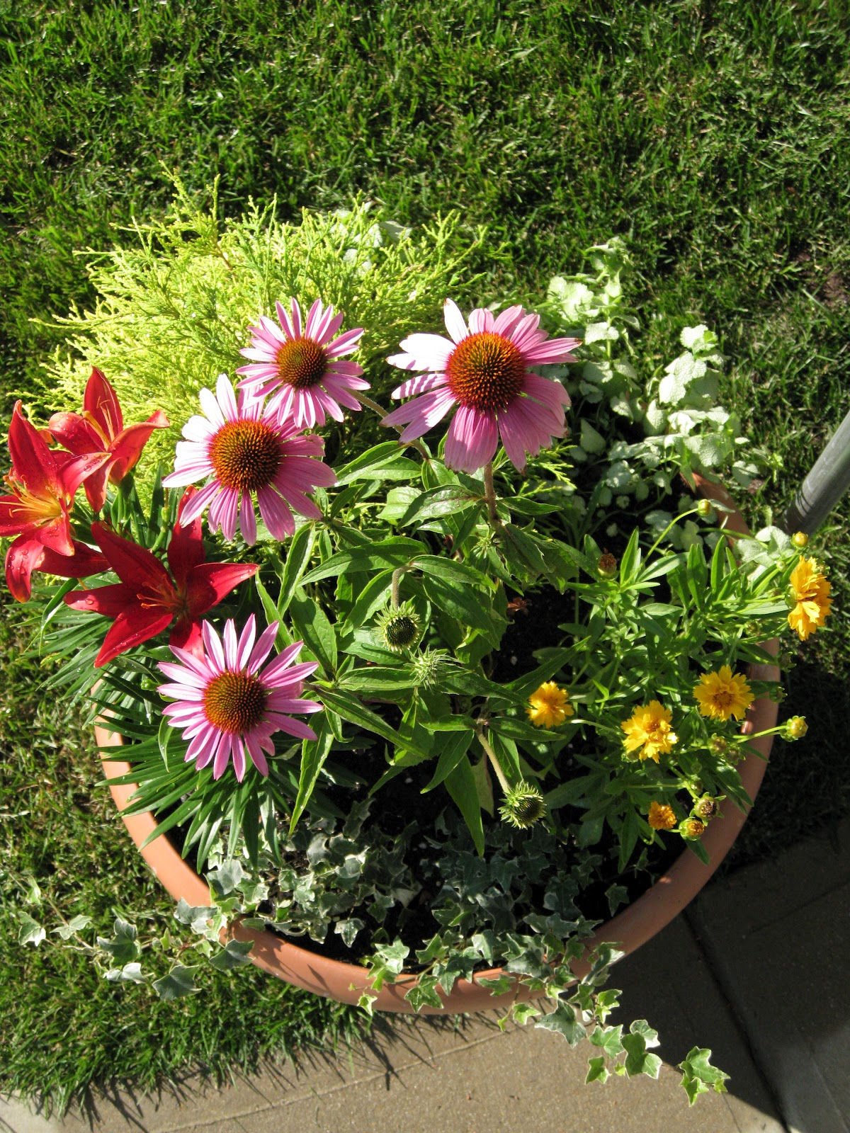 Dr. Dan's Garden Tips: Perennials In A Pot