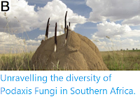 http://sciencythoughts.blogspot.co.uk/2016/07/unravelling-diversity-of-podaxis-fungi.html
