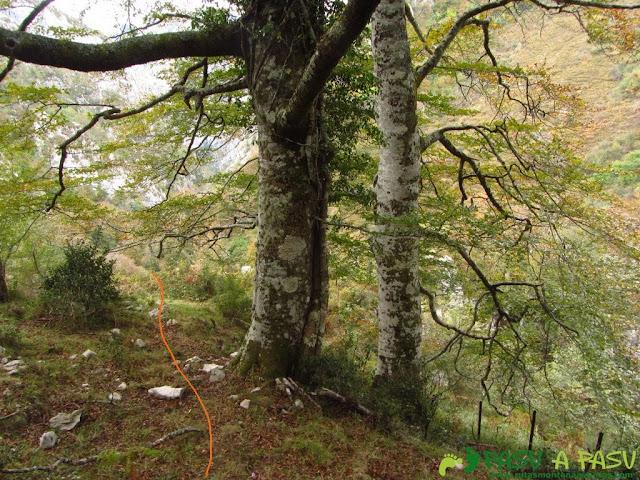 Salida del Bosque de Pome hacia Pelabarda