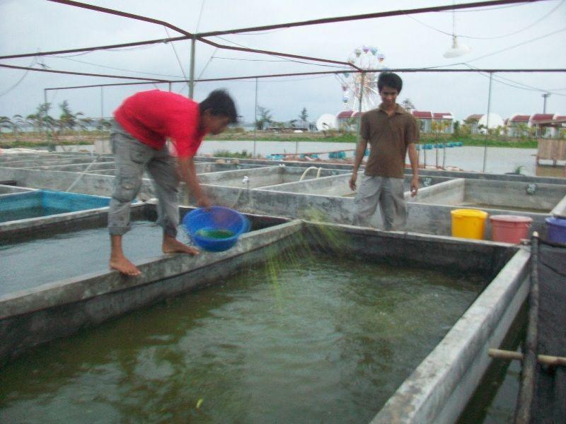 cara membuat kolam ikan kecil