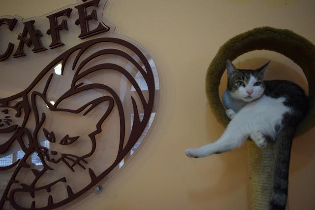 Cat Cafe, Budapest