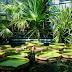 În vizită la Grădina Botanică