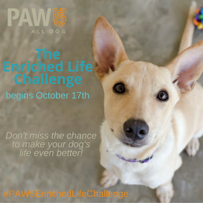 help your dog become healthier by enriching their lives #PAW5EnrichedLifeChallenge