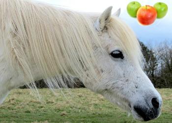 apple cider vinegar (ACV) for horses   diy horse care tips   natural horse care